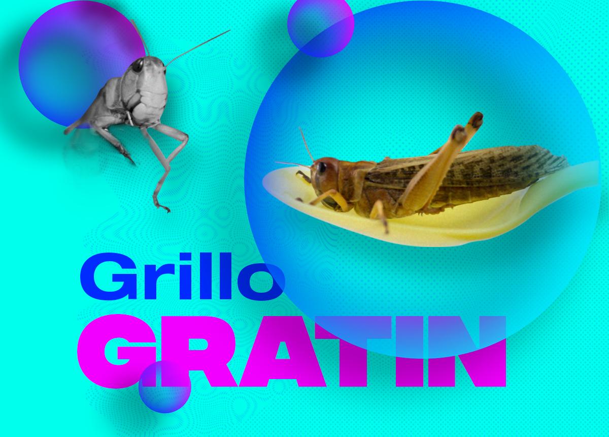 alimentazione a base di insetti